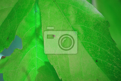 Green leaves spring with nature background