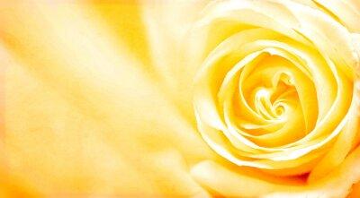Naklejka Grunge banner z żółtą różą i tekstury papieru