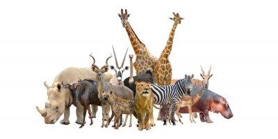 Naklejka Grupa Afryki zwierząt