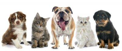 Naklejka grupa zwierzę