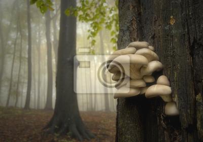 Grzyby na drzewie w lesie