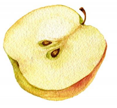 Naklejka Half apple drawing by watercolor