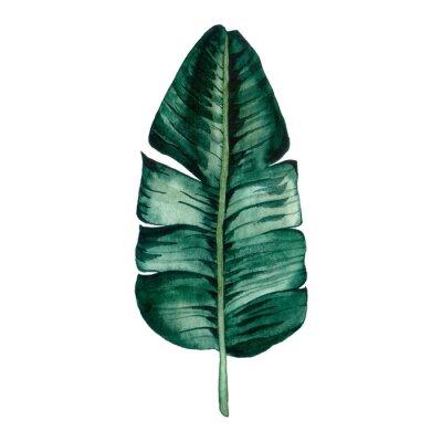 Naklejka Hand drawn watercolor tropical plants set. Exotic palm leaves, jungle tree, brazil tropic botany elements.