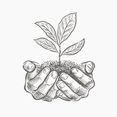 Naklejka Hands and plant sketch vector illustration. Environment protection, business concept