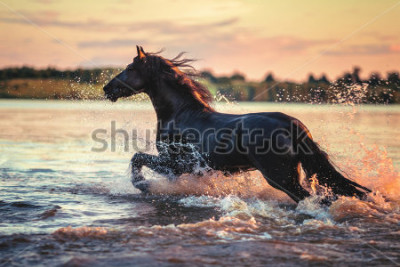 Naklejka Horse