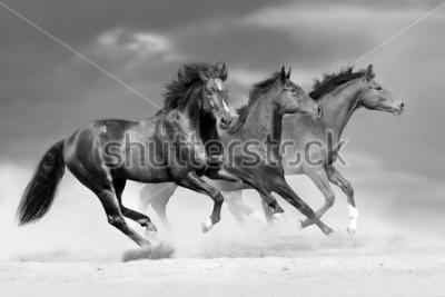 Naklejka Horse herd run in dust