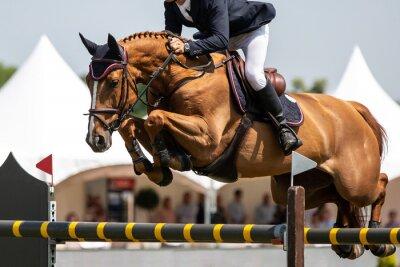 Naklejka Horse Jumping, Equestrian Sports, Show Jumping themed photo.