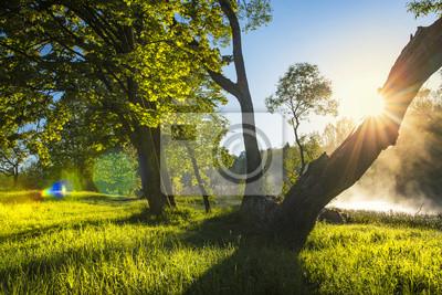 Idealne lato krajobraz na zielonej przyrody z podświetleniem słońca przez pnia drzewa w jasny ciepły dzień. Zieleni drzewa na brzeg rzeki z mgłą nad powierzchnią woda. Czysty słoneczny dzień na zewnąt