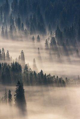 Naklejka iglastego lasu w mglisty górach