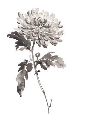 Ilustracja Ink chryzantemy w rozkwicie. Sumi-e, U-sin, gohua malowanie stile. Sylwetka składa się z czarnego pędzla na białym tle.