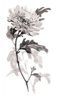 Ilustracja Ink kwiat chryzantemy. Sumi-e, U-sin, gohua malowanie stile. Sylwetka składa się z czarnego pędzla na białym tle.