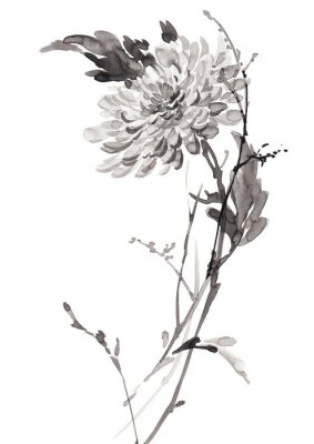 Ilustracja Ink kwiatów, kwitnienie chryzantemy. Sumi-e, U-sin, gohua malowanie stile. Sylwetka składa się z czarnego pędzla na białym tle.