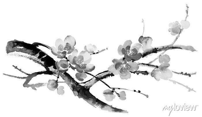 Naklejka Ilustracja Ink kwitnące gałęzie wiśni. Sumi-e, U-sin, gohua stylu malarstwa. Sylwetka składa się z pędzla na białym tle.