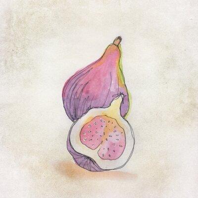 Naklejka Ilustracja owoców z akwarelą