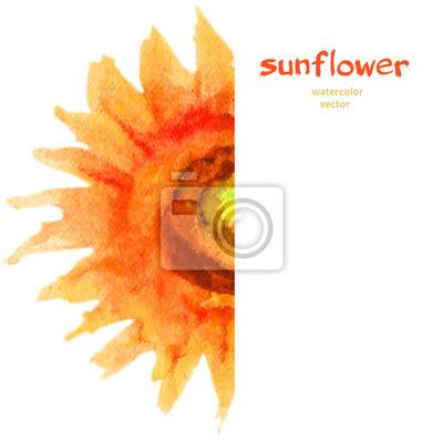 Naklejka Ilustracja słonecznika. Wektor kwiatowy granicy. wzornictwo. Rama akwarela na białym tle. Może być stosowany do transparent, kartki, zaproszenia itp