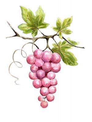 Naklejka Ilustracja - winorośli