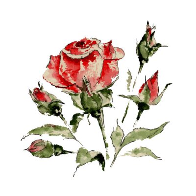 Naklejka Ilustracja z czerwonej róży