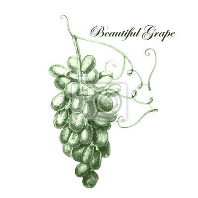 Ilustracja z pięknym winogron