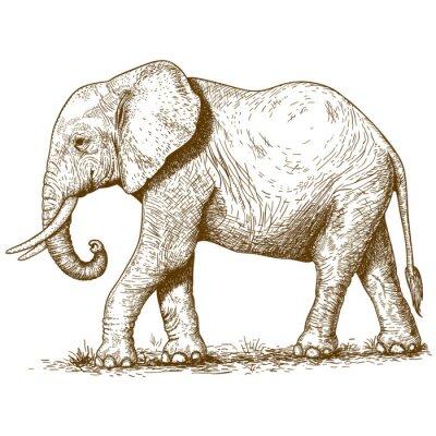 Naklejka ilustracji wektorowych grawerowania słonia