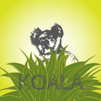 Naklejka ilustracji wektorowych misia koala w liściach eukaliptusa. Koala. drzewo eukaliptusa.
