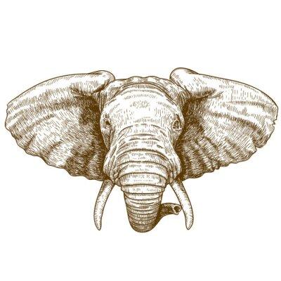 Naklejka ilustracji wektorowych z głową słonia grawerowanie