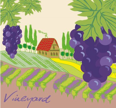 Naklejka ilustracji wektorowych z winnicy