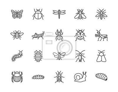 Naklejka Insect flat line icons set. Butterfly, bug, dung beetle, grasshopper, cockroach, scarab, bee, caterpillar vector illustrations. Outline signs for insects pest. Pixel perfect 64x64. Editable Strokes