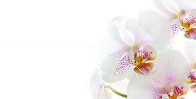 Naklejka isolierte Orchideenblüten