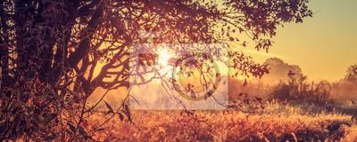 Jasny letni wschód słońca przez gałęzie drzewa na wiejskiej łące w godzinach porannych. Panoramiczny widok złoty krajobraz żywy świt. Malownicza dzika natura. Żółte światło poranka. Inspirujący krajob