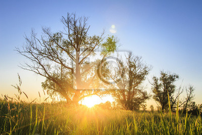 jasny świt na wolności w naturze. Krajobraz drzewa na lato łące w świetle słonecznym. Słońce świeciło na trawie.