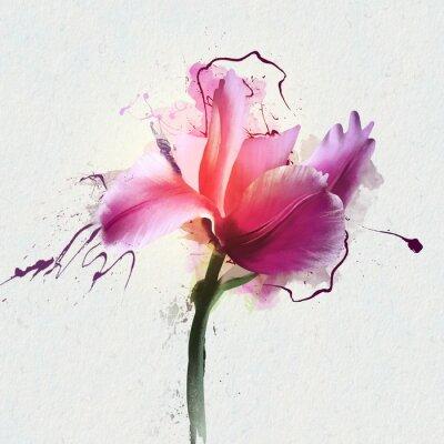 Naklejka Jasny Tulip piękne na białym tle. Rodzaj wieloletnich zielnych roślin bulwiastych z rodziny Lily