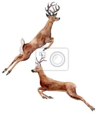 jelenie Akwarela biegania zestaw samodzielnie na białym tle. Chris