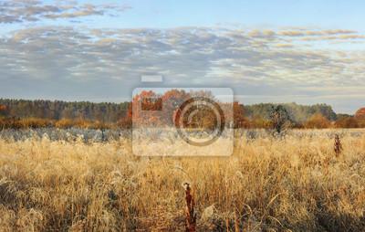 Jesień krajobraz dzika łąka na pogodnym jaskrawym Październiku dniu. Złocista trawa i drzewa z czerwonymi liśćmi na horyzoncie. Spadek.