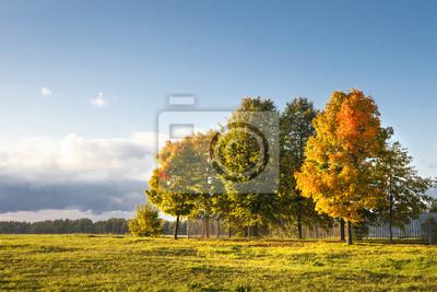 Jesień krajobraz kolorowi drzewa na zielonej łące w parku w jasnym ciepłym wieczór. Ciepłe światło słoneczne pada na drzewa i trawę. Natura żywy upadek. Idylliczne sceny jesieni. Żółte liście na drzew