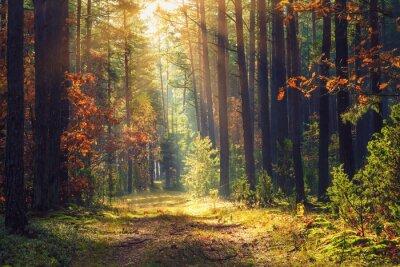 Jesień krajobraz las. Kolorowy ulistnienie na drzewach i trawie błyszczy na sunbeams. Niesamowite lasy. Upadek scenerii. Piękni sunrays w ranku lesie