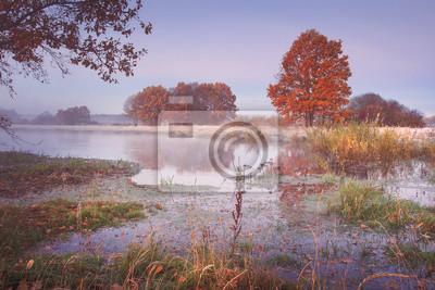 Jesień krajobraz natura. Barwioni drzewa na rzecznym brzeg w jasnym ranku. Sceniczna natura w Październiku