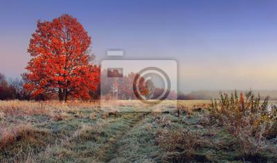 Jesień krajobraz natura. Kolorowy czerwony ulistnienie na gałąź drzewo przy łąką z hoarfrost na trawie w ranku. Panoramiczny widok na malowniczą przyrodę przy spadkiem. Idealny poranek na zewnątrz w l