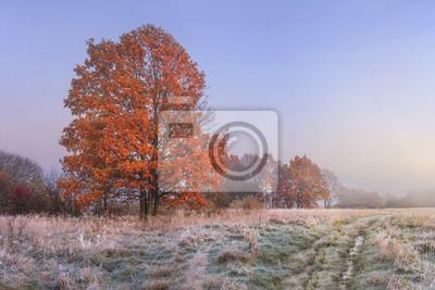 Jesień krajobraz. Niesamowity spadek w listopadzie. Rano odbarwieniem natury. Zimna łąka z hoarfrost na trawie i czerwonym ulistnieniu na drzewach. Kolorowa jesień. Sceneria natura przy wschodem słońc
