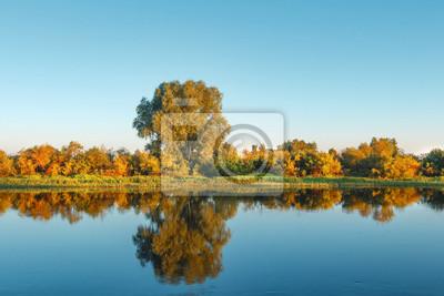 Jesień krajobraz żółci drzewa i trawa na rzecznym brzeg w jasnym ranku. Drzewa i roślinność na brzegu rzeki odbijają się w powierzchni wody. Spadek. kolorowe kolory jesieni w październiku natura.