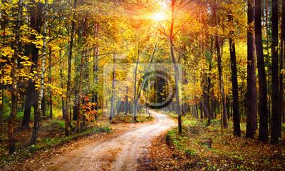 Jesień lasu krajobraz na pogodnym jaskrawym dniu. Żywe promienie słońca przez drzewa w lesie. Kolorowa natura przy sezonem jesiennym.