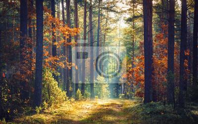 Jesień leśna natura. Żywy ranek w kolorowym lesie z słońce promieniami przez gałąź drzewa. Sceneria natura z światłem słonecznym.