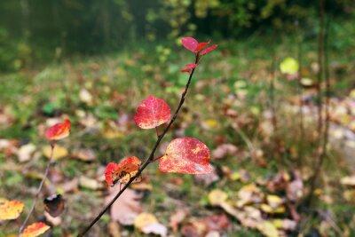 Jesień. Liście w lesie.