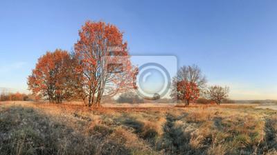 Jesień natura krajobraz na pogodnym jasnym dniu. Kolorowi drzewa z czerwonym ulistnieniem na łące z żółtą trawą. Sceniczny upadek. Niebieskie niebo nad drzewami. Sceneria jesieni pole z drewnami.