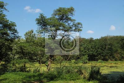 Jesienią krajobraz z zielonych drzew liściastych i stawem