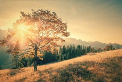 Naklejka Jesienne drzewa i Sunbeam ciepły dzień krajobraz stonowanych rocznika