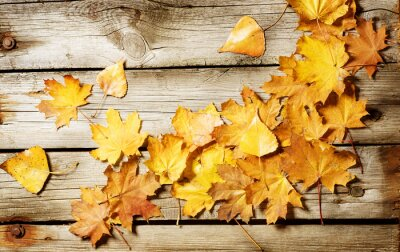 Jesienne liście na tle Konopie