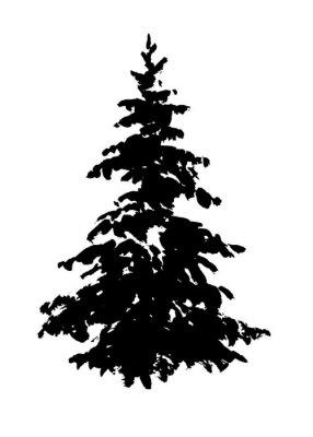 Jodła drzewa sylwetka na białym. Ręcznie rysowane tuszem ilustracji.