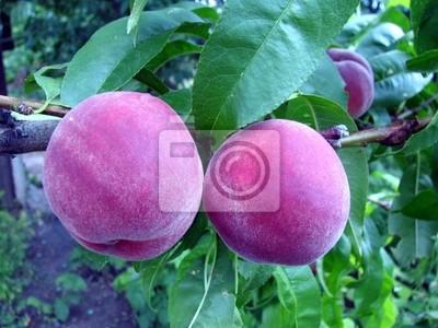 Juicy dojrzałych brzoskwiń