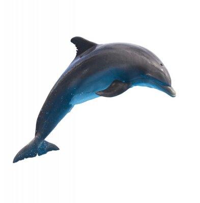 Naklejka jumping dolphin on white