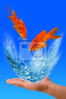Jumping Goldfish.
